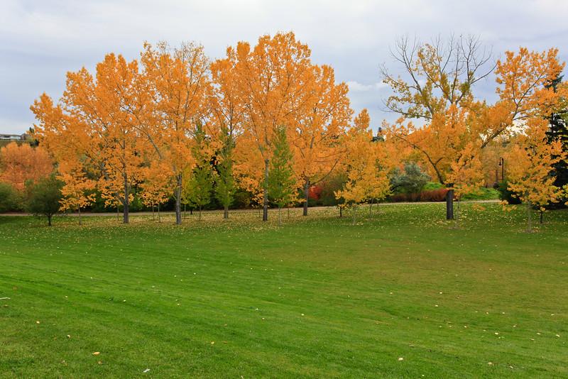 Calgary Prince's Park Fall 2010-9