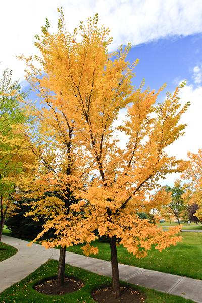 Calgary Prince's Park Fall 2010-16