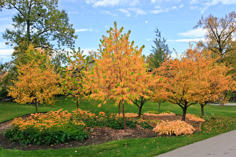 Calgary Prince's Park Fall 2010-8