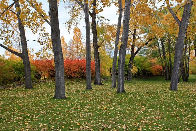 Calgary Prince's Park Fall 2010-6