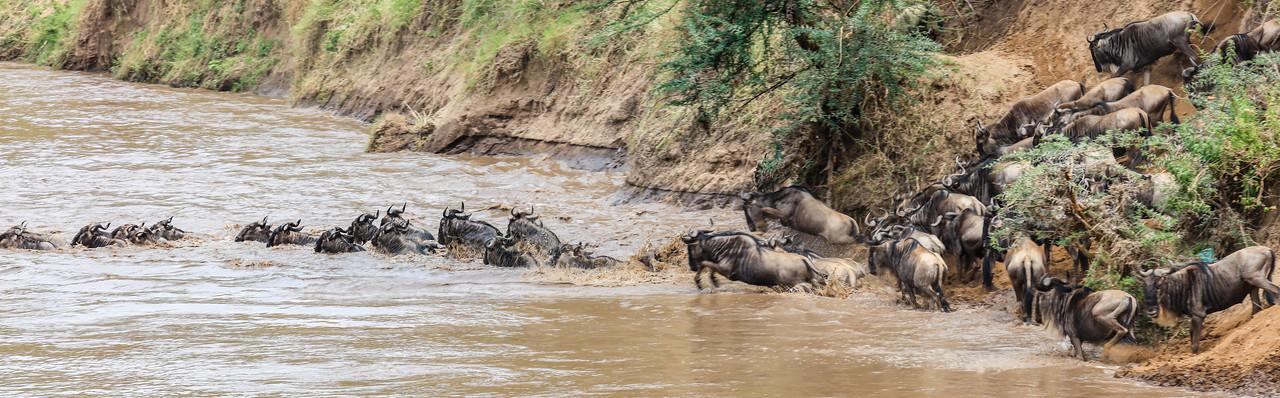 Maasai Mara, Kenya-390