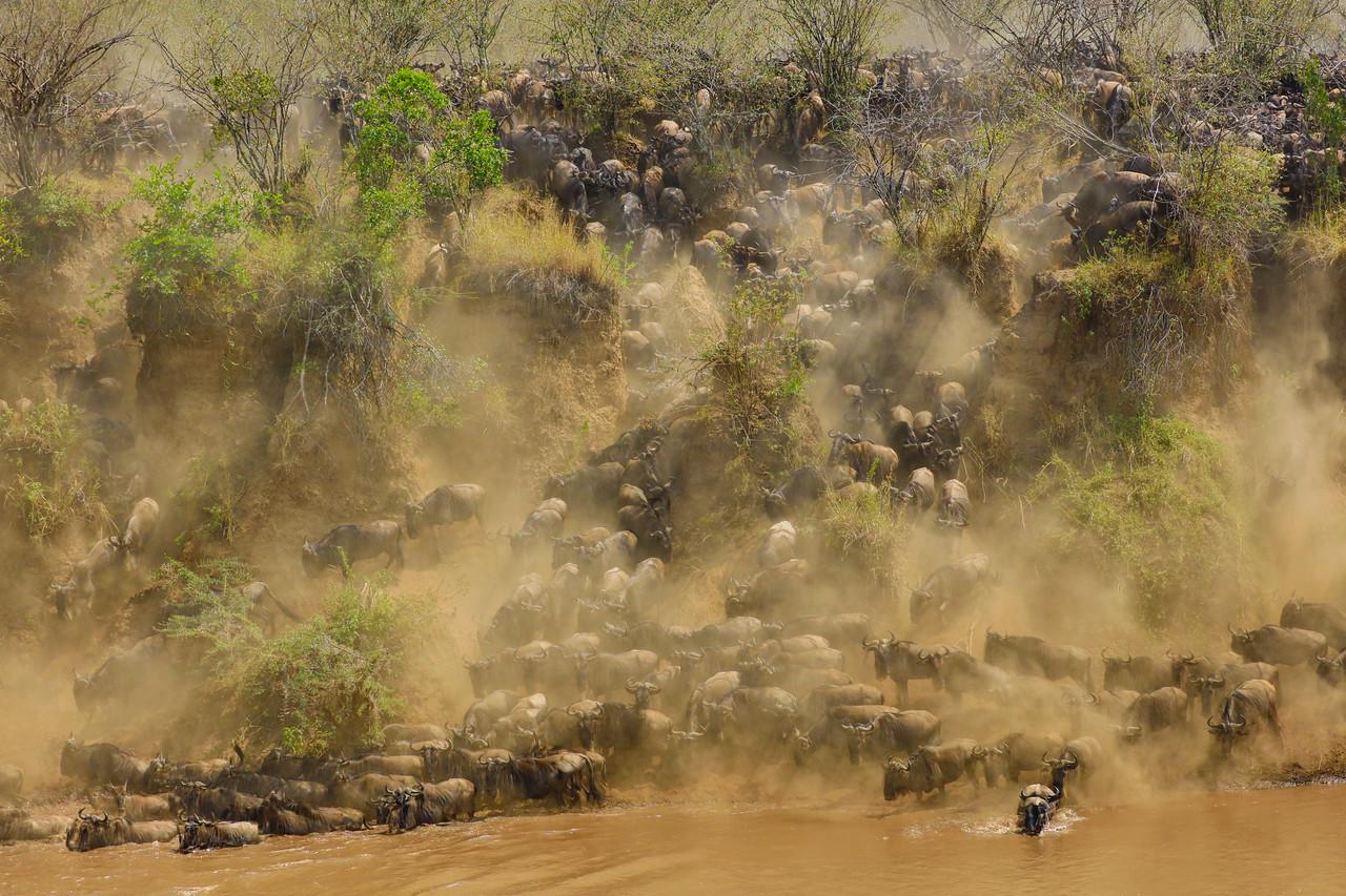 Maasai Mara, Kenya-406