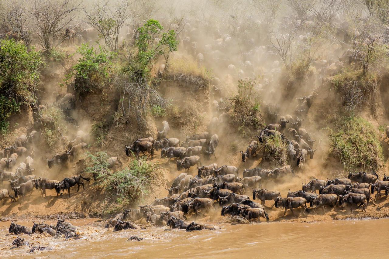 Maasai Mara, Kenya-407