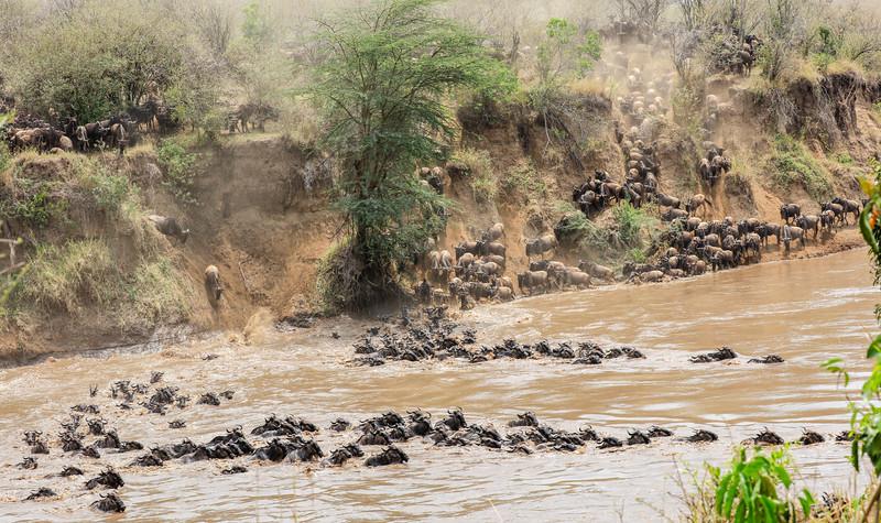 Maasai Mara, Kenya-394