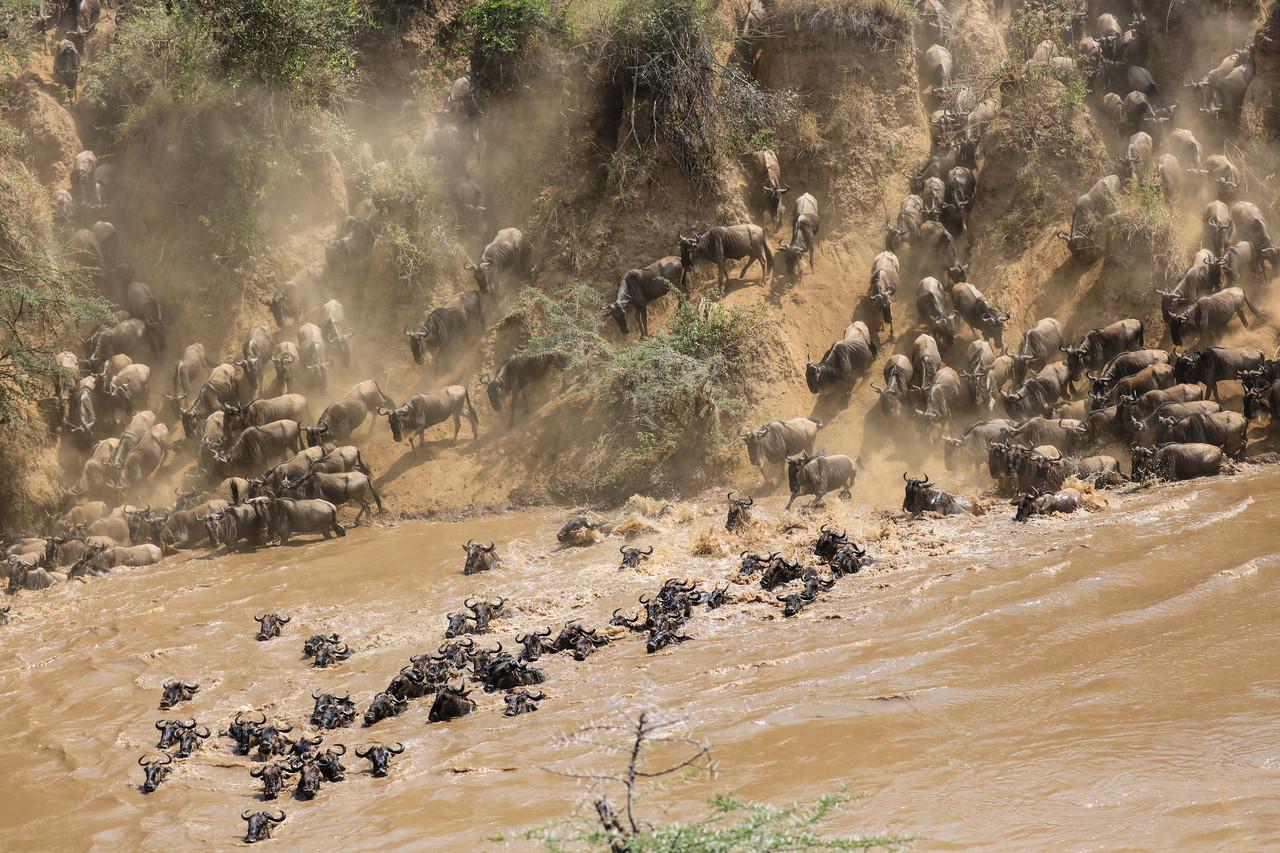 Maasai Mara, Kenya-409