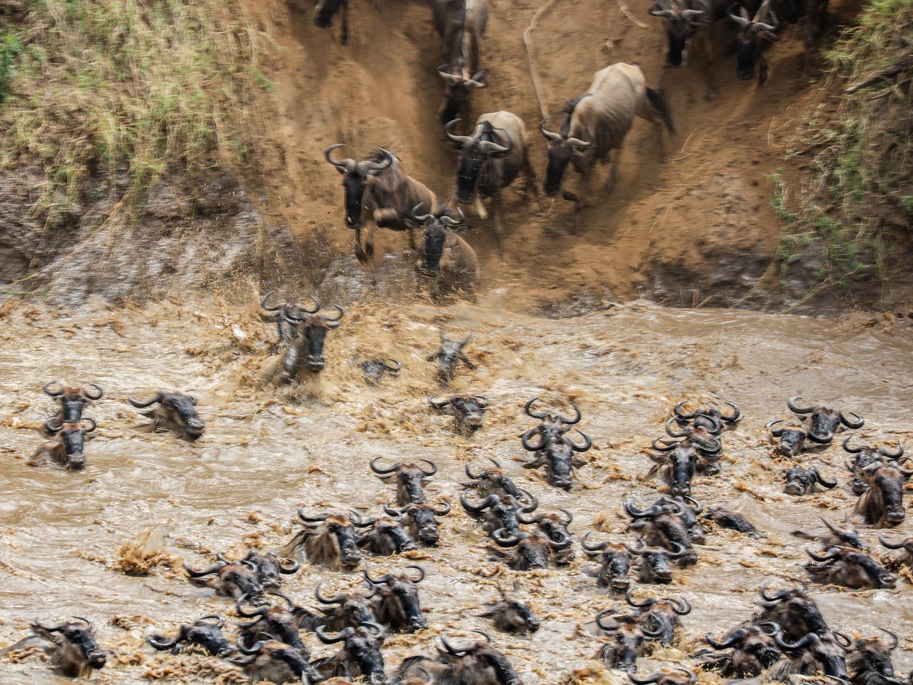 Maasai Mara, Kenya-402