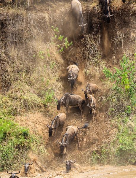 Maasai Mara, Kenya-398