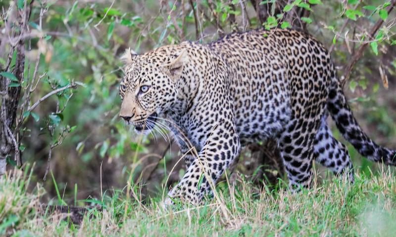 Maasai Mara, Kenya-422