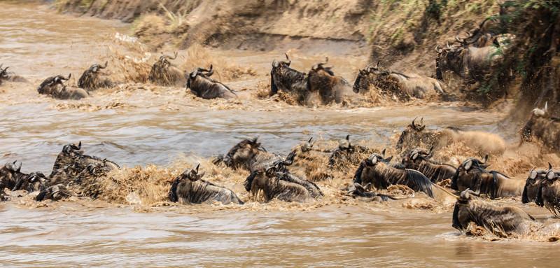Maasai Mara, Kenya-392