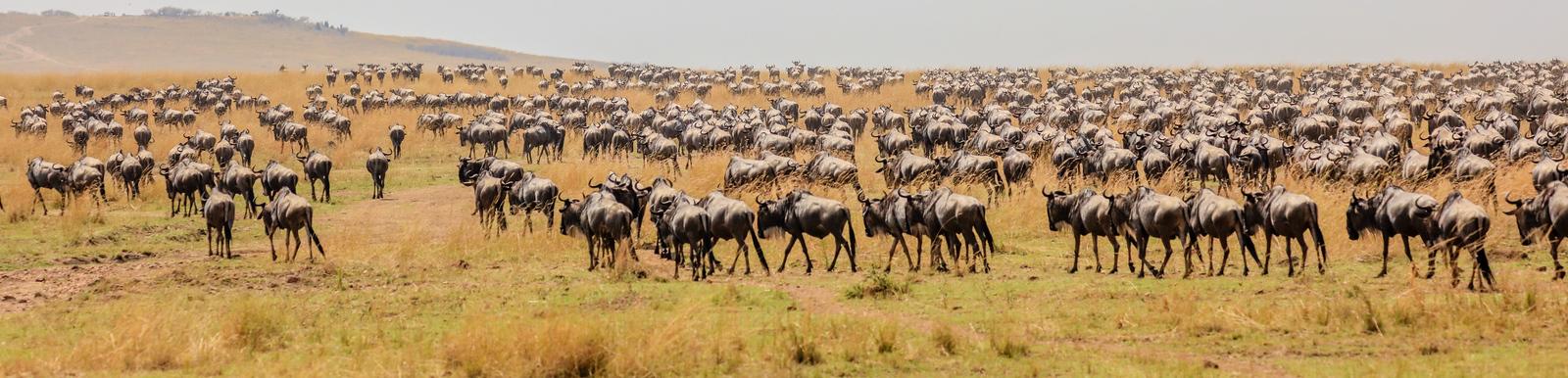 Maasai Mara, Kenya-413
