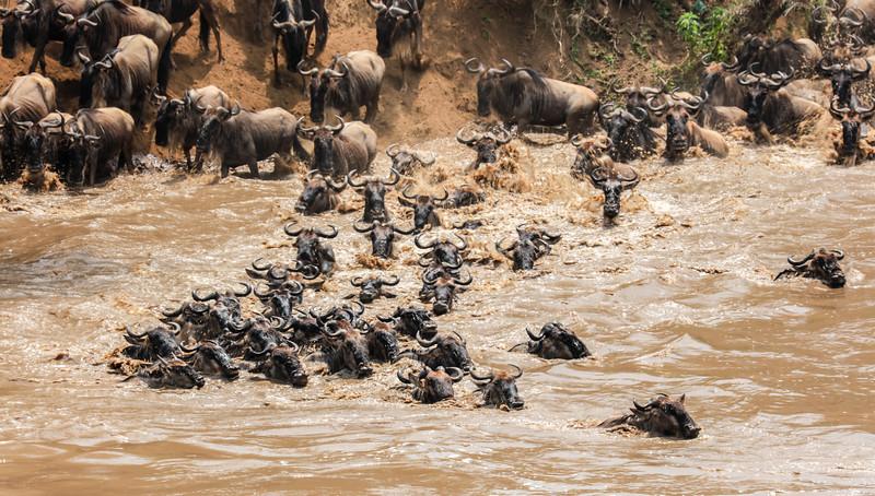 Maasai Mara, Kenya-396
