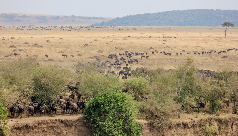 Maasai Mara, Kenya-388