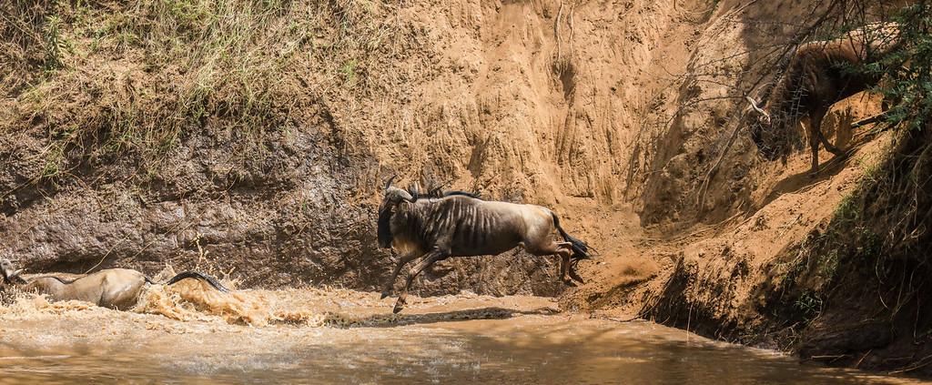 Maasai Mara, Kenya-411