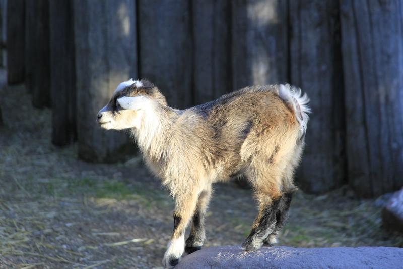 Saskatoon Forestry Farm Zoo 2009-13