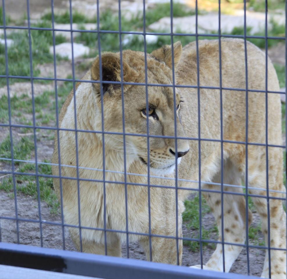 Saskatoon Forestry Farm Zoo 2009-8