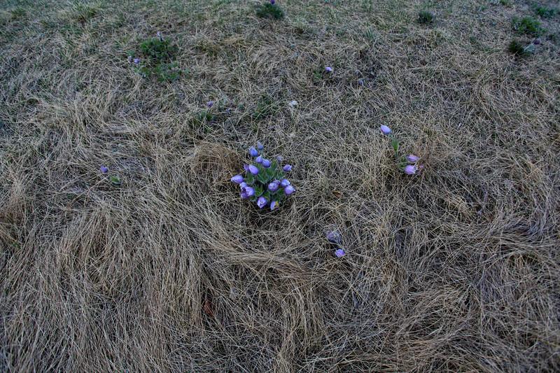 Spring Saskatoon 2009-9