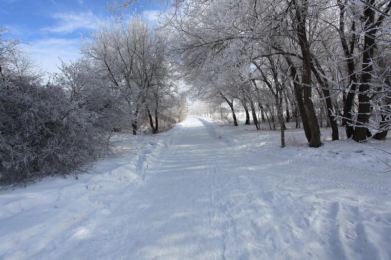 Saskatoon Winter 2009-33