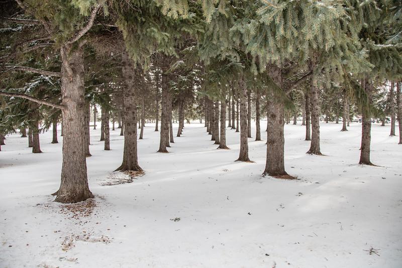 Saskatoon Winter 2016-22