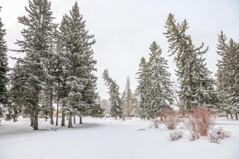 Saskatoon Winter 2016-19