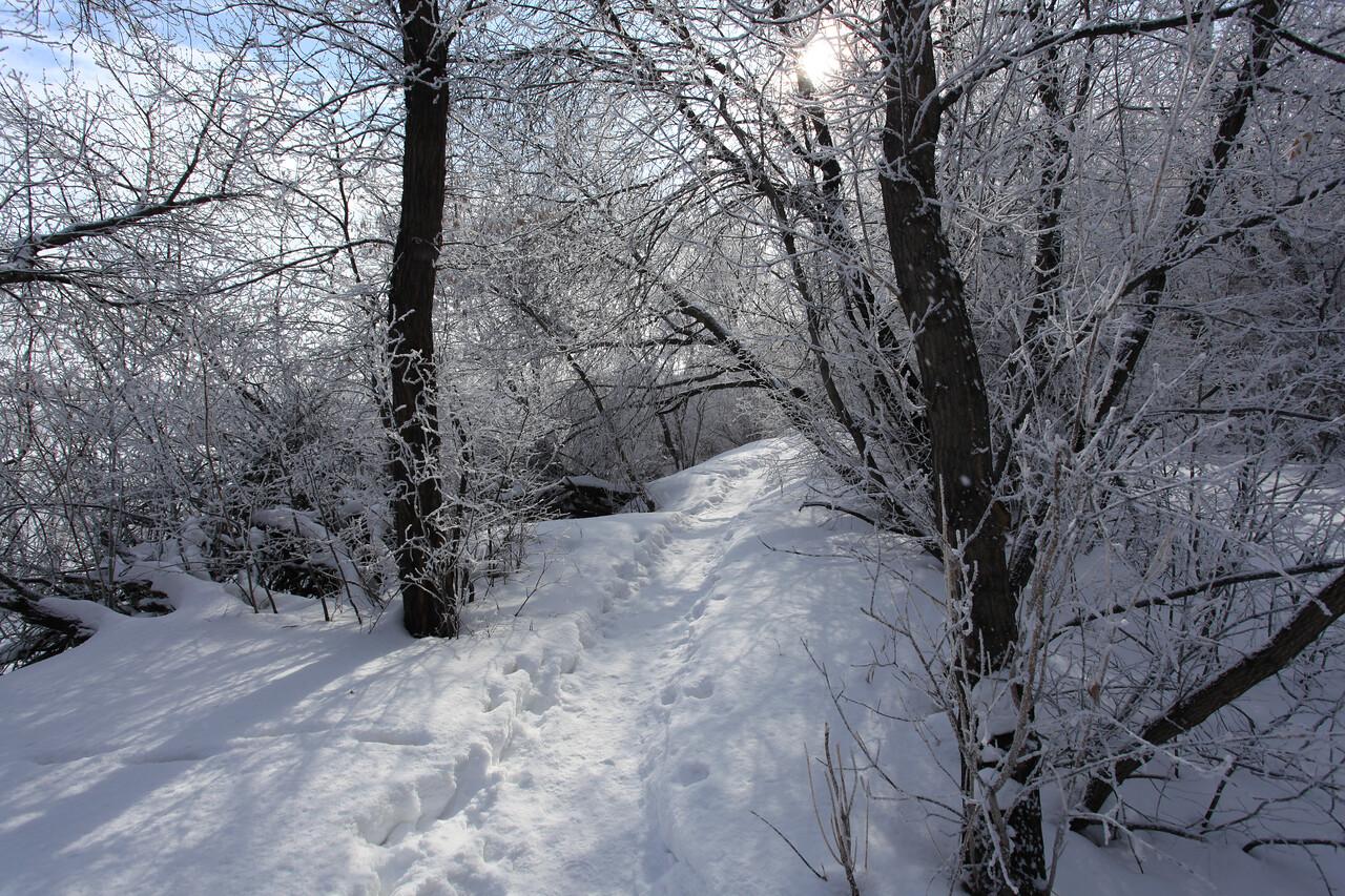 Saskatoon Winter 2009-25