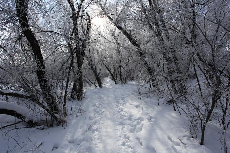 Saskatoon Winter 2009-26