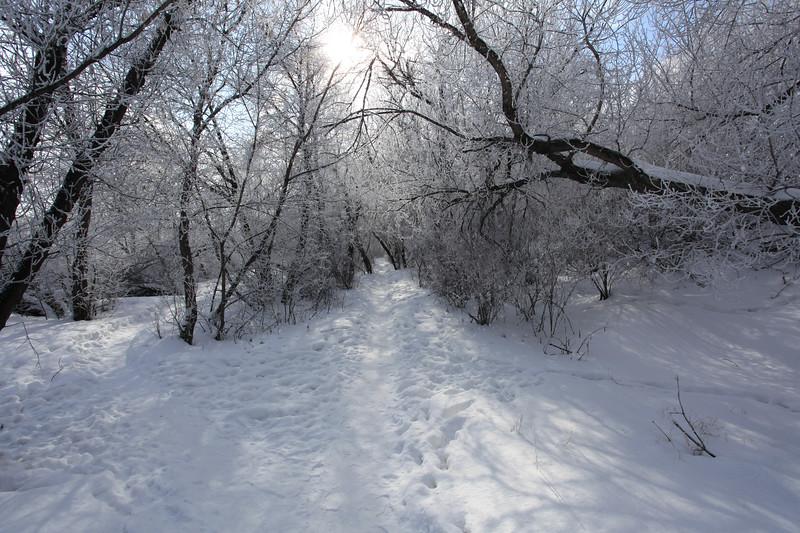 Saskatoon Winter 2009-24