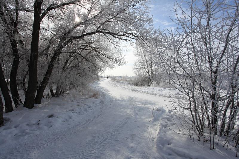 Saskatoon Winter 2009-34