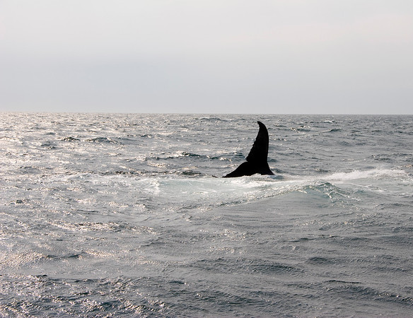 Cape Cod Whale Watch Trip