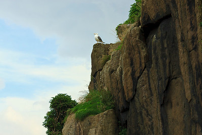Father Seagull surveying his kingdom - and staking out his territory I might add!