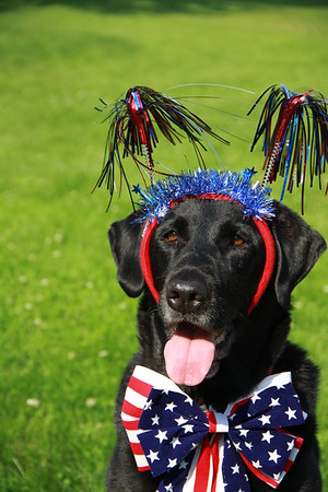 "Wrigley says ""Happy  4th""  Photographer's Name: lynne sensor Photographer's City and State: marengo, IL"