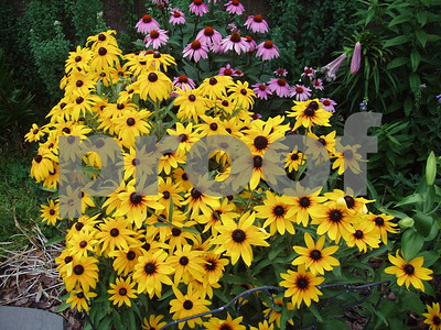 FLOWERS A PLENTY  Photographer's Name: LISA LARSON Photographer's City and State: GENOA, IL