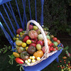 My Heirloom Tomatoes from my garden<br /> <br /> Photographer's Name: Donna Zielinski<br /> Photographer's City and State: Elgin, IL
