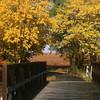 October Walk<br /> <br /> Photographer's Name: Marja Neylon<br /> Photographer's City and State: Geneva, IL