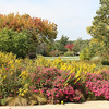 Beautiful Fall day at the Arboretum, Oct. 2012<br /> <br /> Photographer's Name: Sylvia Kaufmann<br /> Photographer's City and State: Elburn, IL