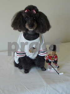 GO BLACKHAWKS!  Photographer's Name: Donna Dunn Photographer's City and State: Sycamore, IL