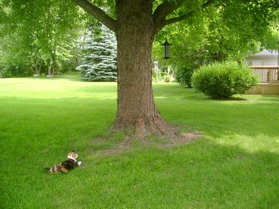 Just bird watching!  Photographer's Name: Susan Leonard Photographer's City and State: Marengo, IL