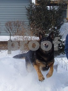 At least someone likes snow!  Photographer's Name: Lisa Larson Photographer's City and State: Genoa, IL
