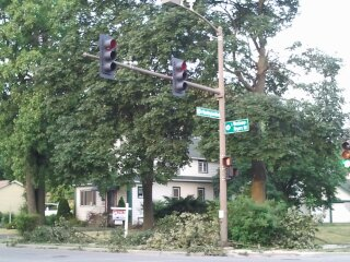 Lombard Trees Suffered From Tornado Lightning in the Summer 2012  Photographer's Name: Gardenia C. Hung Photographer's City and State: Lombard, IL