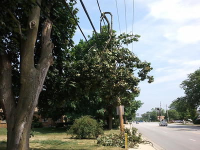 During July, A Tornado Swept Through Westmore-Meyers Road and Struck Tree Limbs by Lightning in the Summer 2012.  Photographer's Name: Gardenia C. Hung Photographer's City and State: Lombard, IL