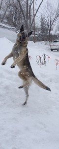 Snow Dance - Blizzard 2015  Photographer's Name: Sandy Hartogh Photographer's City and State: Island Lake, IL