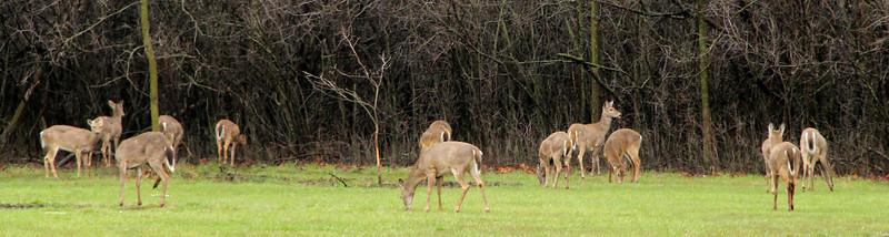 deer  Photographer's Name: Joe  Godinez Photographer's City and State: Brookfield, IL