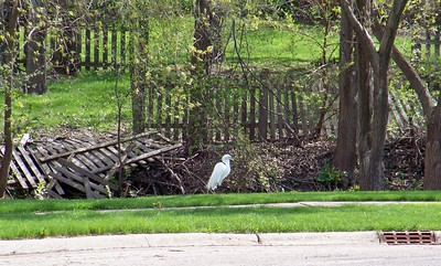 Finally! A Fence Inspector....  Photographer's Name: Dave Quinn Photographer's City and State: McHenry, IL