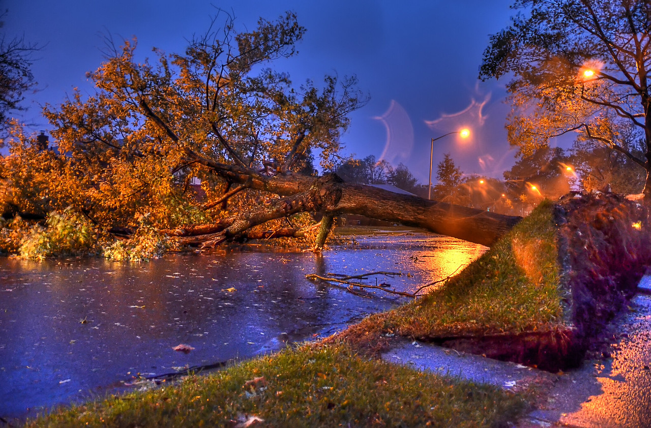 Downed tree from Hurricane Sandy