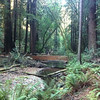 Muir Woods in Mill Valley, CA.<br /> <br /> Photographer's Name: Kelsey Rakers<br /> Photographer's City and State: St. Charles, IL