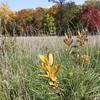 Arboretum October 2012<br /> <br /> Photographer's Name: Sylvia Kaufmann<br /> Photographer's City and State: Elburn, IL