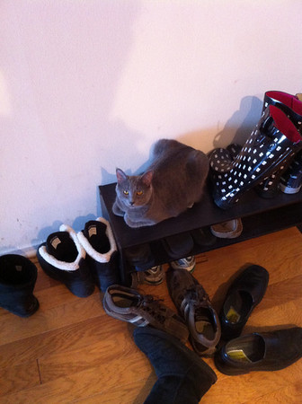 My cat Lily thinks she's a shoe. Fortunately for her, she's mistaken.<br /> <br /> Photographer's Name: Mike Van Der Harst<br /> Photographer's City and State: St. Charles, IN