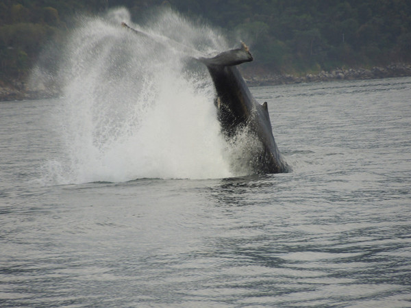 Whale watching in Puerto Vallarta, Mexico<br /> <br /> Photographer's Name: Jennifer Mobley<br /> Photographer's City and State: Saint Charles, IL