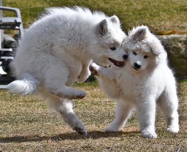 Kika (left) and Mika (right)