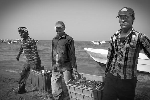 Pescadores chegam a terra com carregamento de caranguejos, Bahrain.<br /> A abundância do mar do Golfo Pérsico contrasta fortemente com a desolação do deserto em terra. É um dos poucos meios de subsistência da camada mais pobre da população, tipicamente constituída por Indianos, Paquistaneses e Filipinos.<br /> 2013
