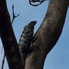 During a walk on the grounds around our villa.  Any little rustling noise we heard could be a sign of an iguana scuttling away.